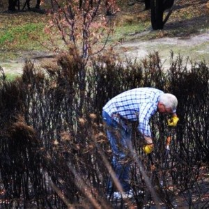 Firle Stake president Rainer  Korte clearing a patch of burnt-out scrub.