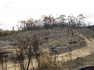 A stark reminder of the January fires  in the Adelaide Hills